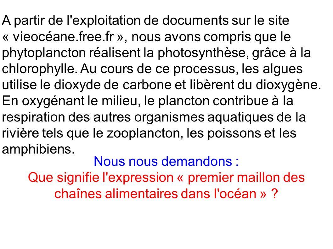 A partir de l'exploitation de documents sur le site « vieocéane.free.fr », nous avons compris que le phytoplancton réalisent la photosynthèse, grâce à