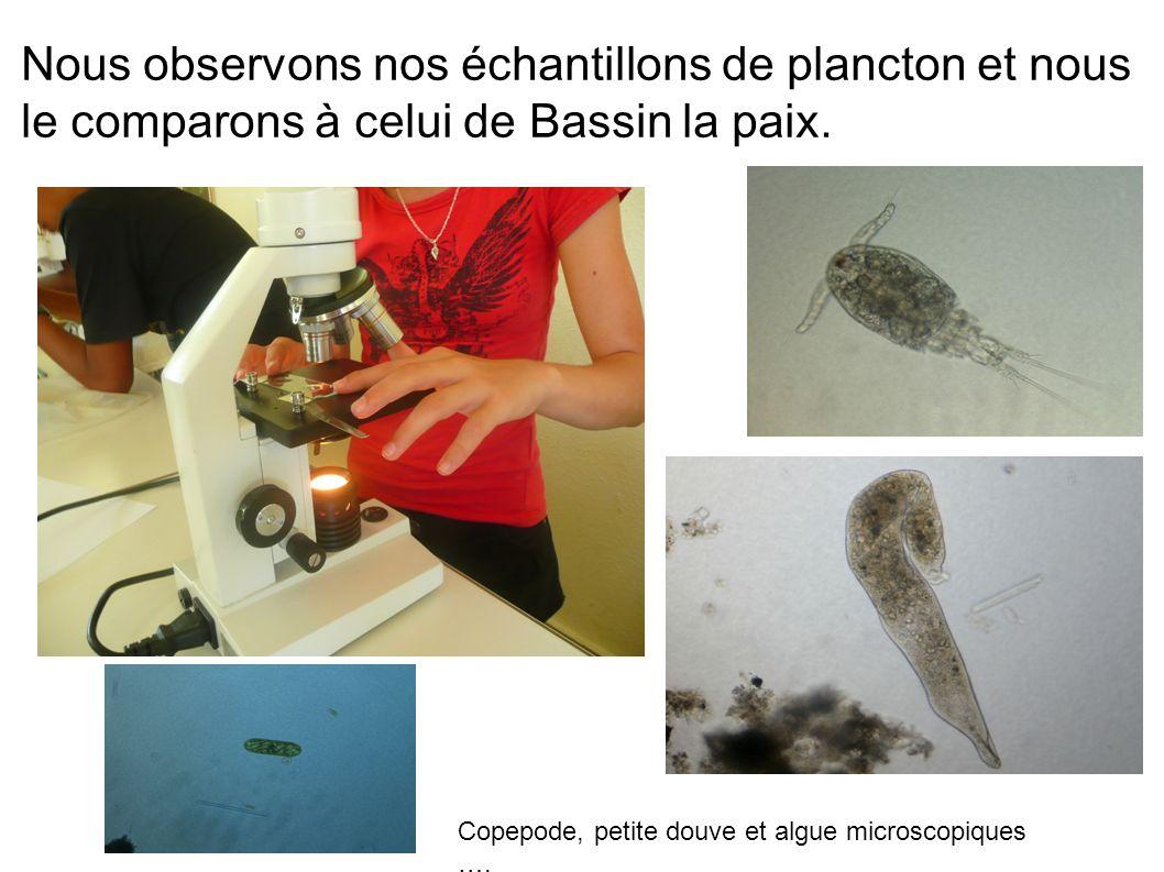 Nous observons nos échantillons de plancton et nous le comparons à celui de Bassin la paix. Copepode, petite douve et algue microscopiques ….