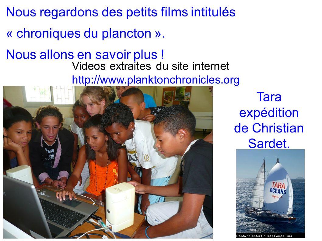 Nous regardons des petits films intitulés « chroniques du plancton ». Nous allons en savoir plus ! Videos extraites du site internet http://www.plankt