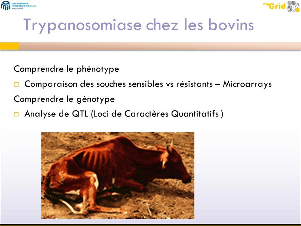 Trypanosomiase chez les bovins Comprendre le phénotype Comparaison des souches sensibles vs résistants – Microarrays Comprendre le génotype Analyse de