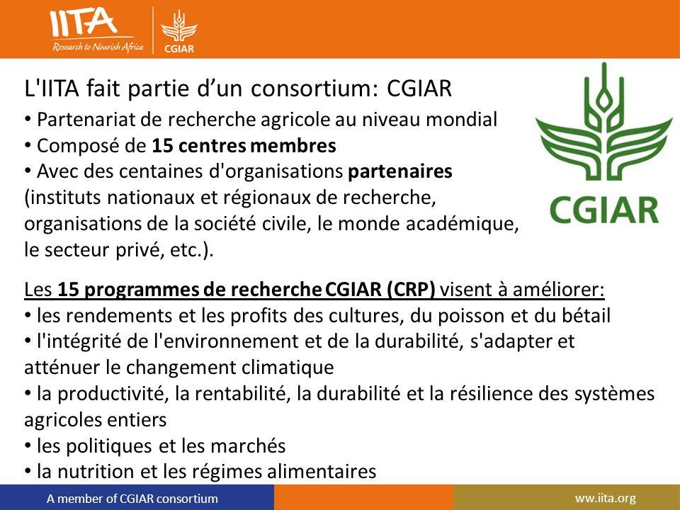 A member of CGIAR consortium L'IITA fait partie dun consortium: CGIAR Partenariat de recherche agricole au niveau mondial Composé de 15 centres membre