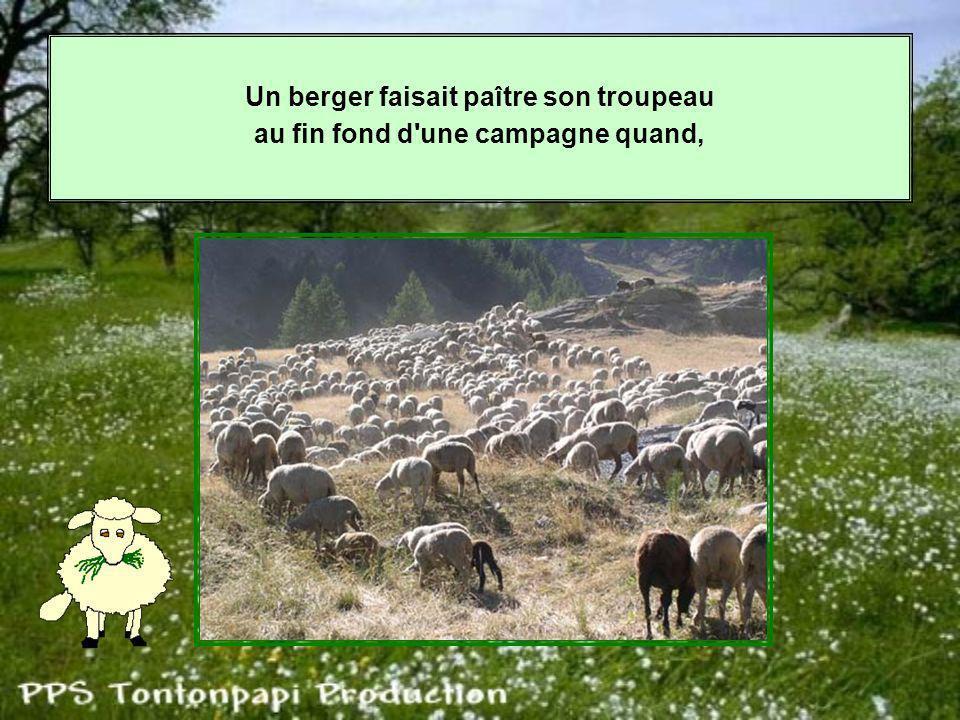 Un berger faisait paître son troupeau au fin fond d une campagne quand,