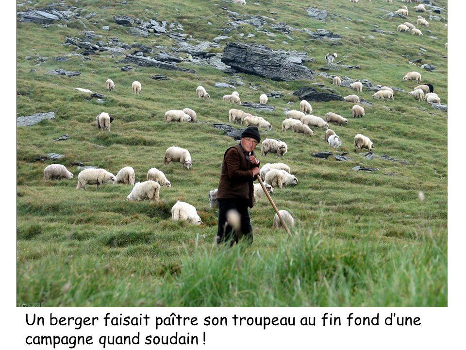 Un berger faisait paître son troupeau au fin fond dune campagne quand soudain !