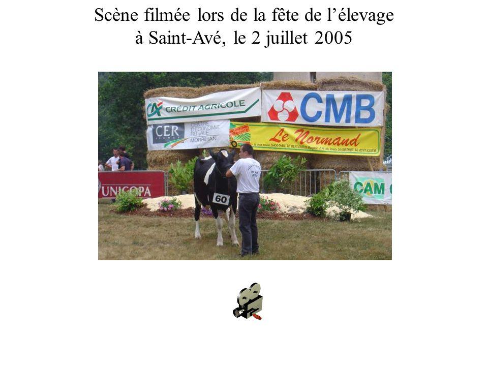 Scène filmée lors de la fête de lélevage à Saint-Avé, le 2 juillet 2005