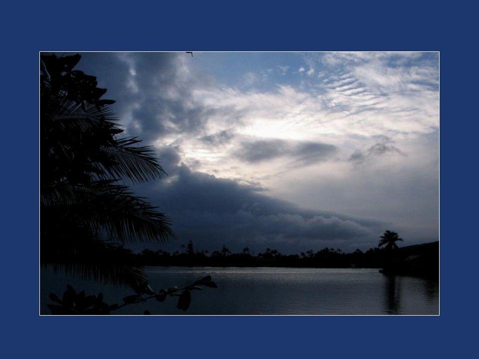 Et il lance ses longues branches vers ton futur tout plein de promesse et d espérance, comme un projet emballant.