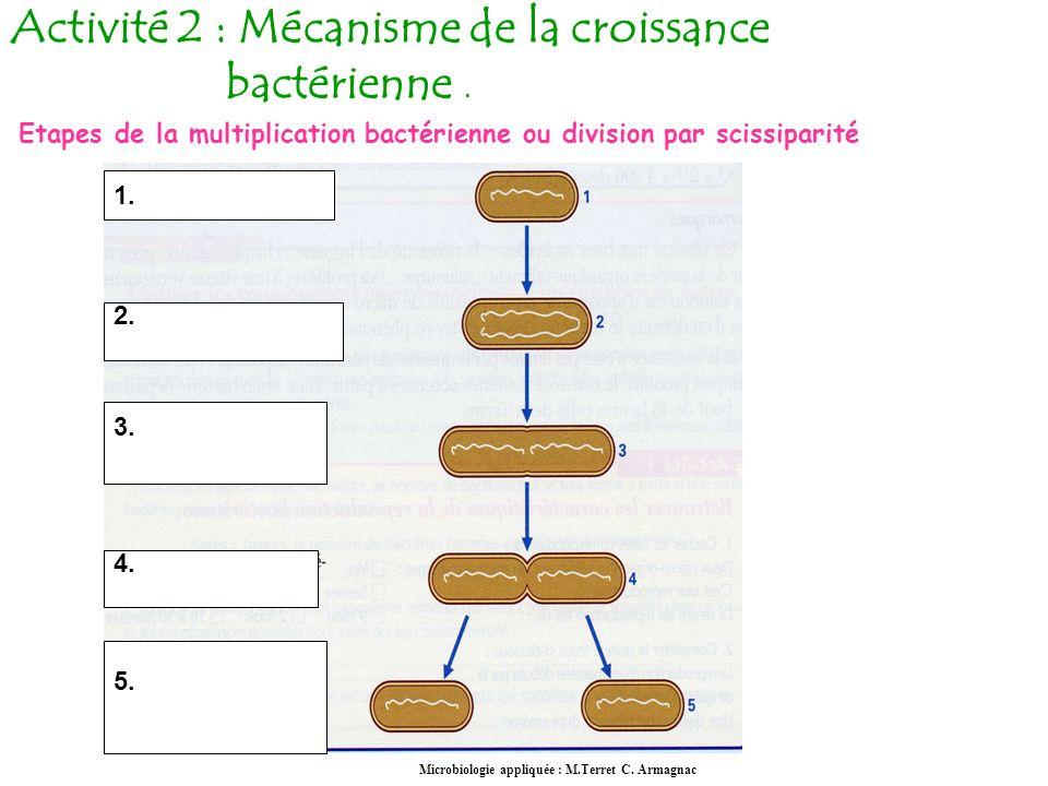 Activité 2 : Mécanisme de la croissance bactérienne.