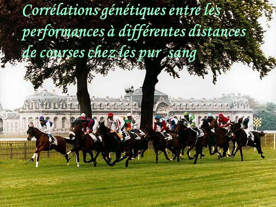 Au brésil les pur-sang de courses courent sur différentes distances au cours de leur vie: 600à 4000 m ; avec la plupart des courses (90%) qui se concentrent du 1000 m au 1600 m.