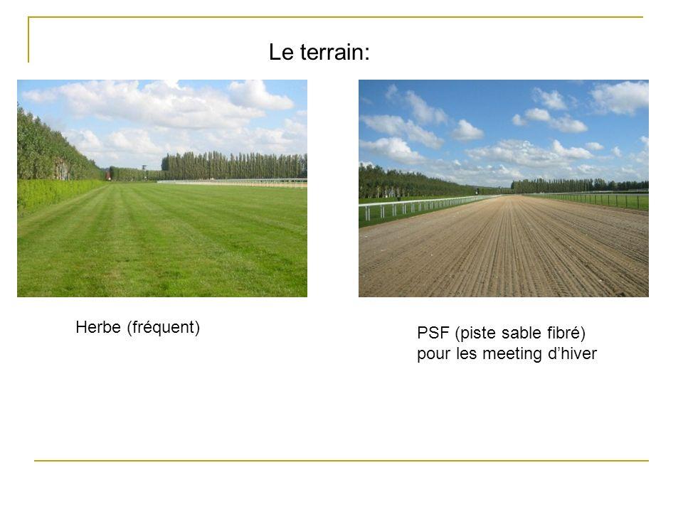 Herbe (fréquent) PSF (piste sable fibré) pour les meeting dhiver Le terrain: