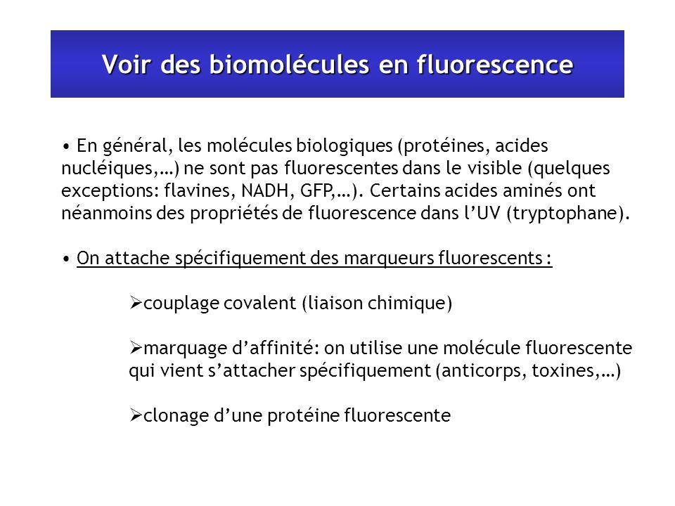 Voir des biomolécules en fluorescence En général, les molécules biologiques (protéines, acides nucléiques,…) ne sont pas fluorescentes dans le visible (quelques exceptions: flavines, NADH, GFP,…).