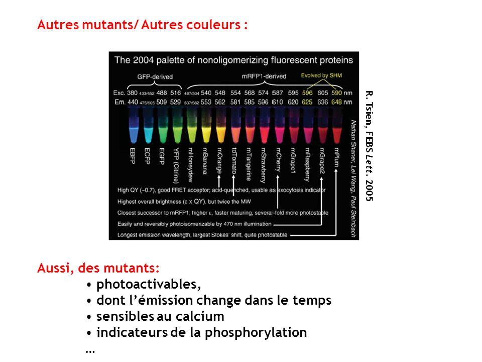 R. Tsien, FEBS Lett. 2005 Aussi, des mutants: photoactivables, dont lémission change dans le temps sensibles au calcium indicateurs de la phosphorylat