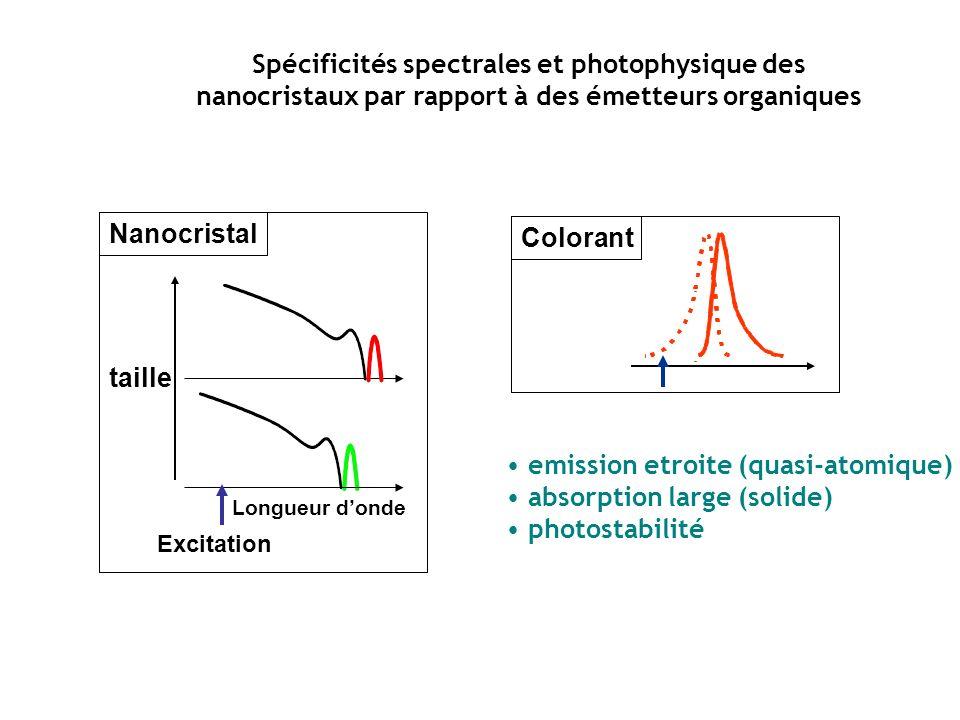 Longueur donde taille Excitation Colorant Nanocristal Spécificités spectrales et photophysique des nanocristaux par rapport à des émetteurs organiques emission etroite (quasi-atomique) absorption large (solide) photostabilité