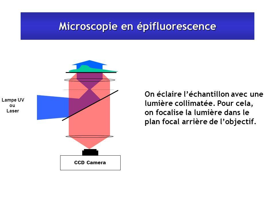 Microscopie en épifluorescence On éclaire léchantillon avec une lumière collimatée. Pour cela, on focalise la lumière dans le plan focal arrière de lo