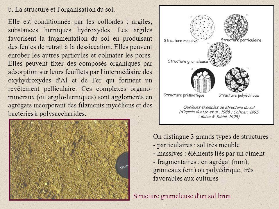 b. La structure et l'organisation du sol. Elle est conditionnée par les colloïdes : argiles, substances humiques hydroxydes. Les argiles favorisent la
