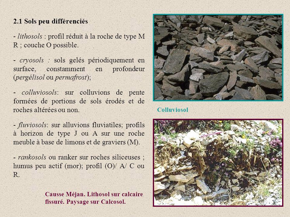 2.1 Sols peu différenciés - lithosols : profil réduit à la roche de type M R ; couche O possible. - cryosols : sols gelés périodiquement en surface, c