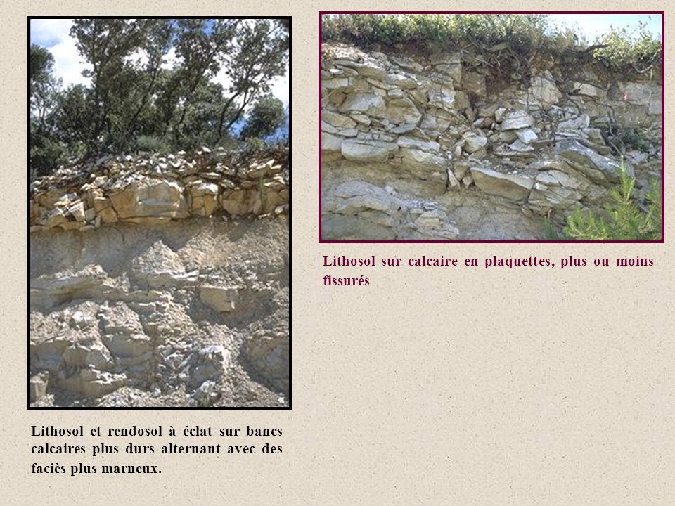 Lithosol et rendosol à éclat sur bancs calcaires plus durs alternant avec des faciès plus marneux. Lithosol sur calcaire en plaquettes, plus ou moins