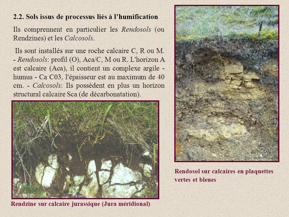 2.2. Sols issus de processus liés à lhumification Ils comprennent en particulier les Rendosols (ou Rendzines) et les Calcosols. Ils sont installés sur