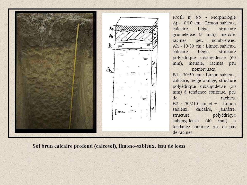 Sol brun calcaire profond (calcosol), limono-sableux, issu de loess Profil n° 95 - Morphologie Ap - 0/10 cm : Limon sableux, calcaire, beige, structur