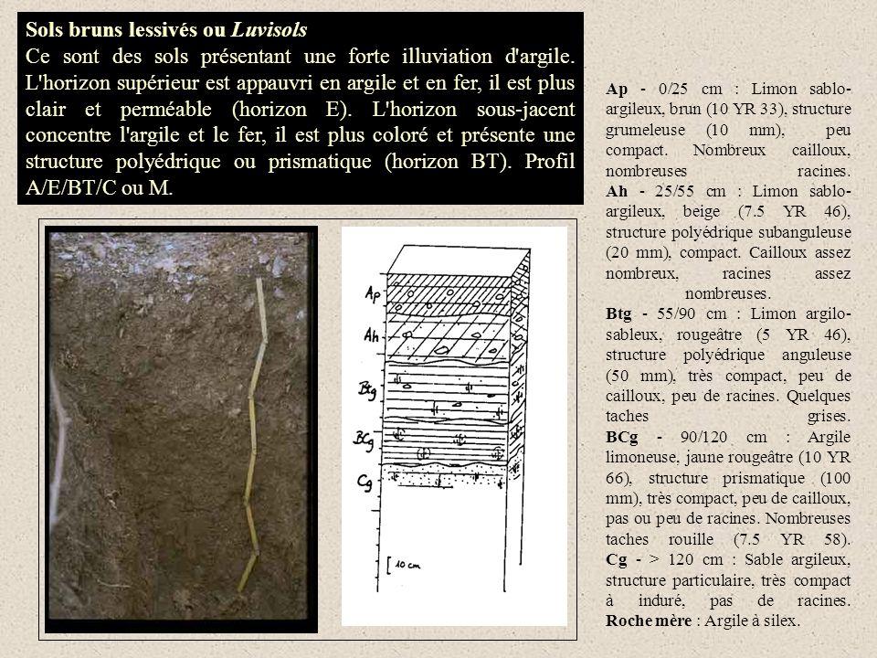 Sols bruns lessivés ou Luvisols Ce sont des sols présentant une forte illuviation d'argile. L'horizon supérieur est appauvri en argile et en fer, il e