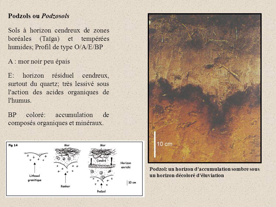 Podzols ou Podzosols Sols à horizon cendreux de zones boréales (Taïga) et tempérées humides; Profil de type O/A/E/BP A : mor noir peu épais E: horizon