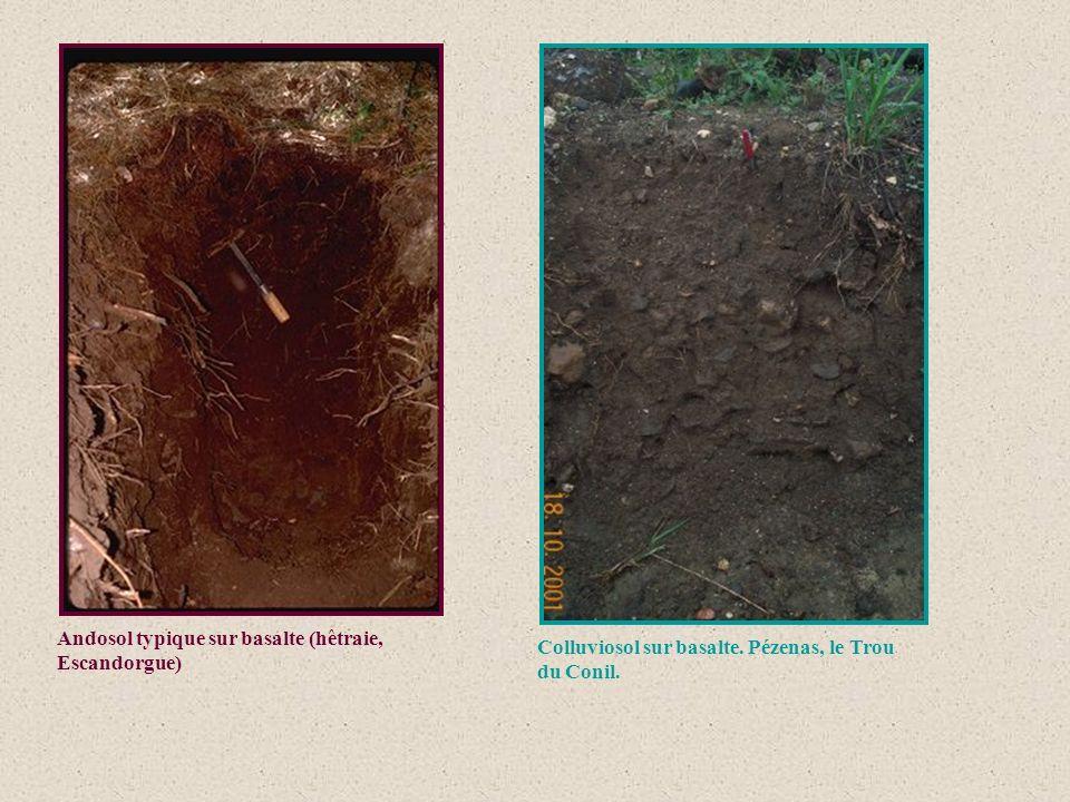 Andosol typique sur basalte (hêtraie, Escandorgue) Colluviosol sur basalte. Pézenas, le Trou du Conil.