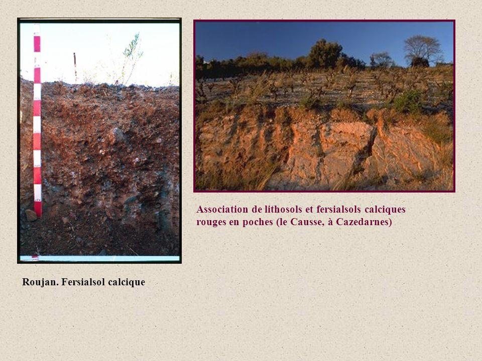 Roujan. Fersialsol calcique Association de lithosols et fersialsols calciques rouges en poches (le Causse, à Cazedarnes)