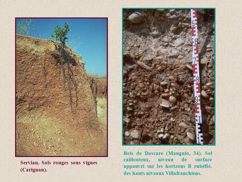 Servian. Sols rouges sous vignes (Carignan). Bois de Doscare (Mauguio, 34). Sol caillouteux, niveau de surface appauvri sur les horizons B rubéfié. de