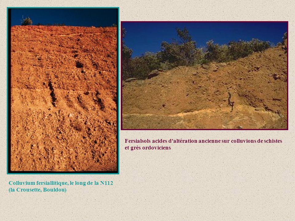 Fersialsols acides d'altération ancienne sur colluvions de schistes et grès ordoviciens Colluvium fersiallitique, le long de la N112 (la Crousette, Bo