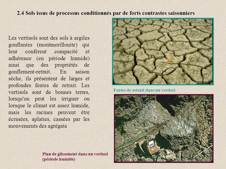Les vertisols sont des sols à argiles gonflantes (montmorillonite) qui leur confèrent compacité et adhérence (en période humide) ainsi que des proprié