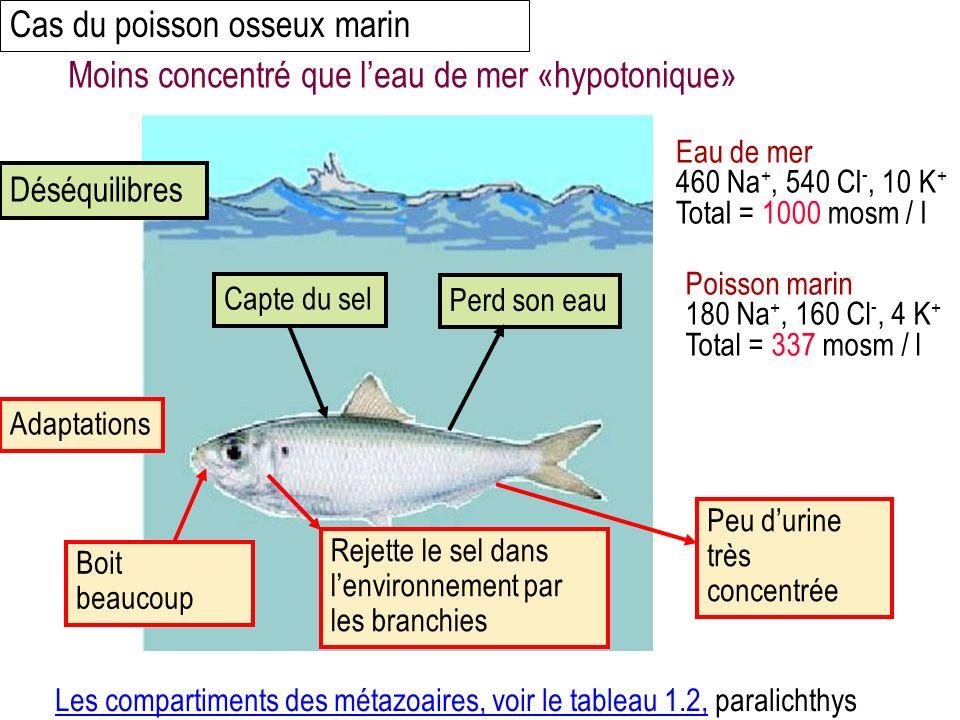 Cas du poisson osseux marin Eau de mer 460 Na +, 540 Cl -, 10 K + Total = 1000 mosm / l Poisson marin 180 Na +, 160 Cl -, 4 K + Total = 337 mosm / l Capte du selPerd son eau Déséquilibres Boit beaucoup Rejette le sel dans lenvironnement par les branchies Peu durine très concentrée Adaptations Les compartiments des métazoaires, voir le tableau 1.2,Les compartiments des métazoaires, voir le tableau 1.2, paralichthys Moins concentré que leau de mer «hypotonique»