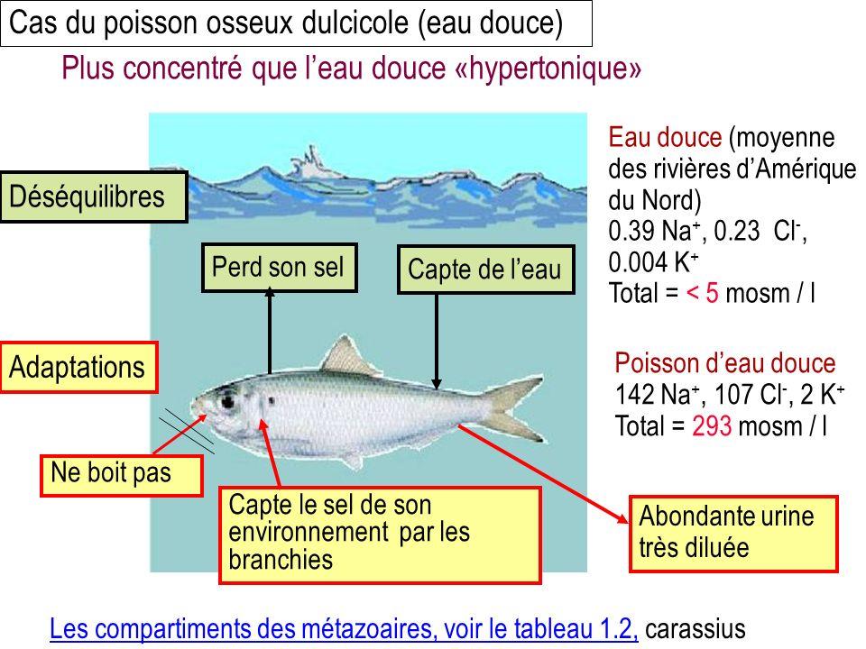 Cas du poisson osseux dulcicole (eau douce) Eau douce (moyenne des rivières dAmérique du Nord) 0.39 Na +, 0.23 Cl -, 0.004 K + Total = < 5 mosm / l Poisson deau douce 142 Na +, 107 Cl -, 2 K + Total = 293 mosm / l Perd son selCapte de leau Capte le sel de son environnement par les branchies Abondante urine très diluée Plus concentré que leau douce «hypertonique» Déséquilibres Adaptations Les compartiments des métazoaires, voir le tableau 1.2,Les compartiments des métazoaires, voir le tableau 1.2, carassius Ne boit pas