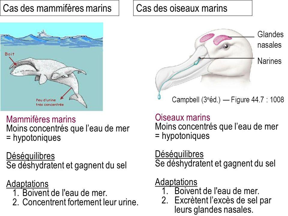 Mammifères marins Moins concentrés que leau de mer = hypotoniques Déséquilibres Se déshydratent et gagnent du sel Adaptations 1.Boivent de l eau de mer.