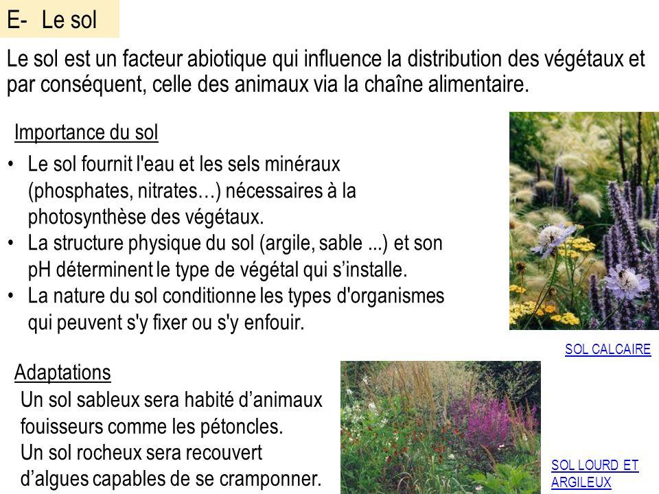 Le sol est un facteur abiotique qui influence la distribution des végétaux et par conséquent, celle des animaux via la chaîne alimentaire.