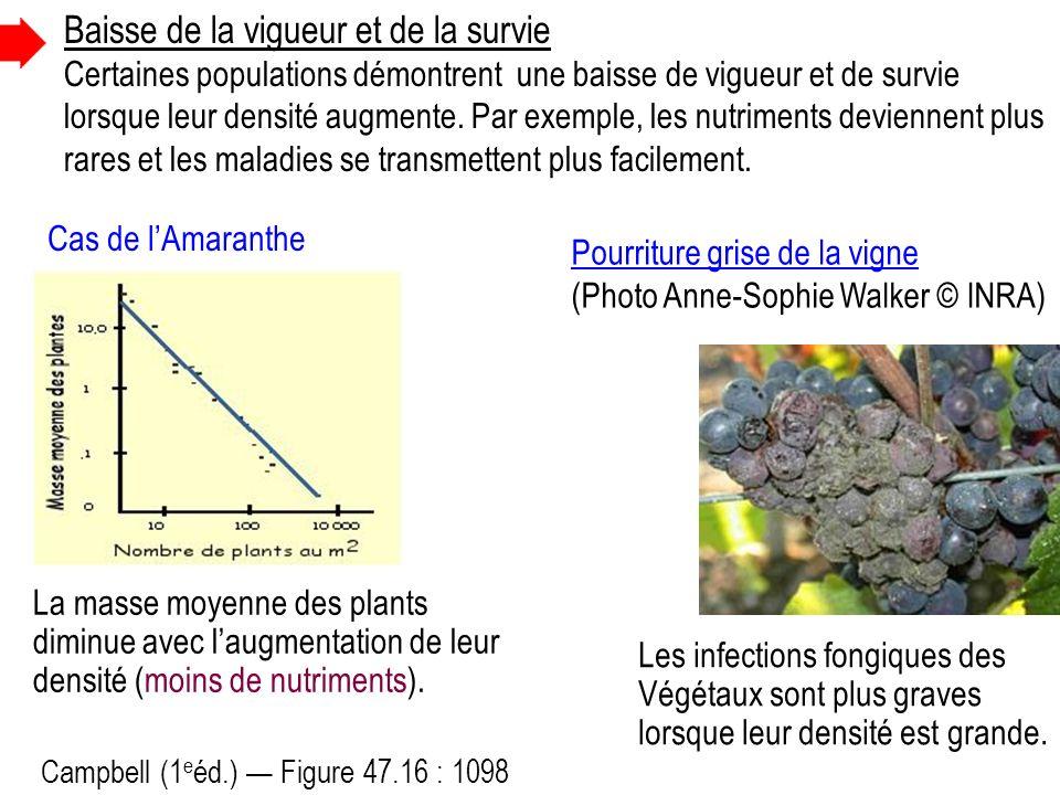 Campbell (1 e éd.) Figure 47.16 : 1098 La masse moyenne des plants diminue avec laugmentation de leur densité (moins de nutriments).