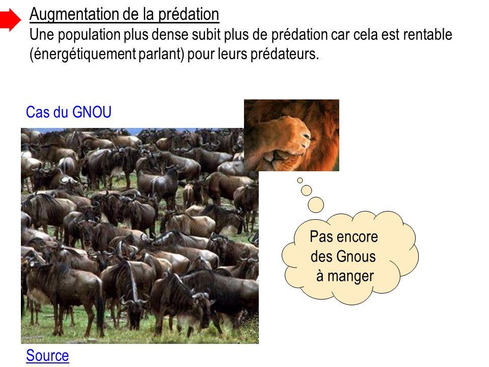 Cas du GNOU Augmentation de la prédation Une population plus dense subit plus de prédation car cela est rentable (énergétiquement parlant) pour leurs prédateurs.