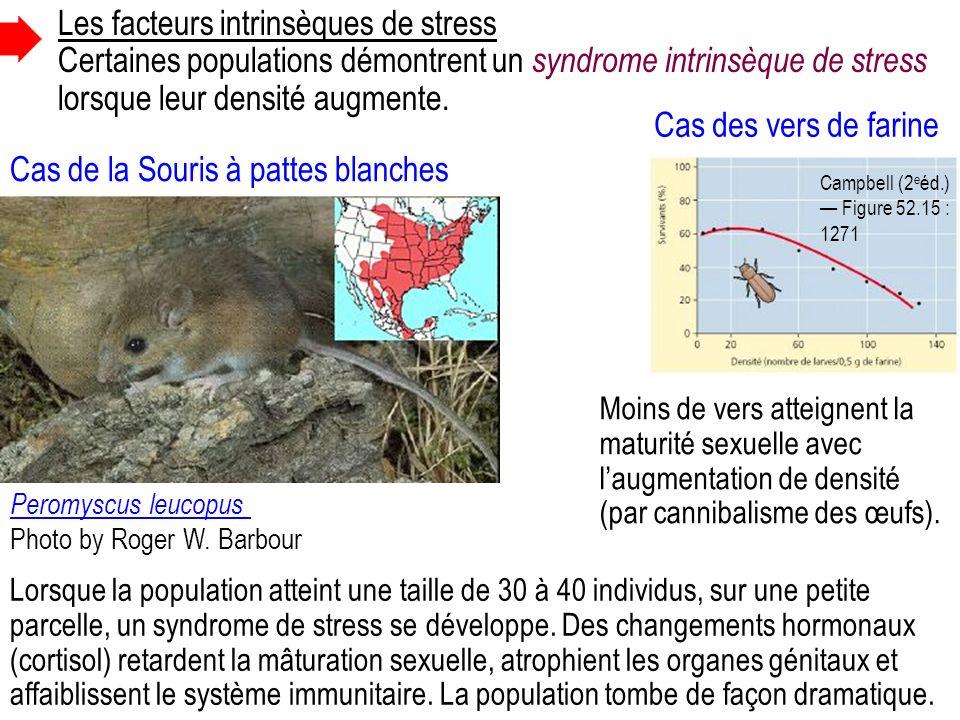 Cas de la Souris à pattes blanches Les facteurs intrinsèques de stress Certaines populations démontrent un syndrome intrinsèque de stress lorsque leur densité augmente.