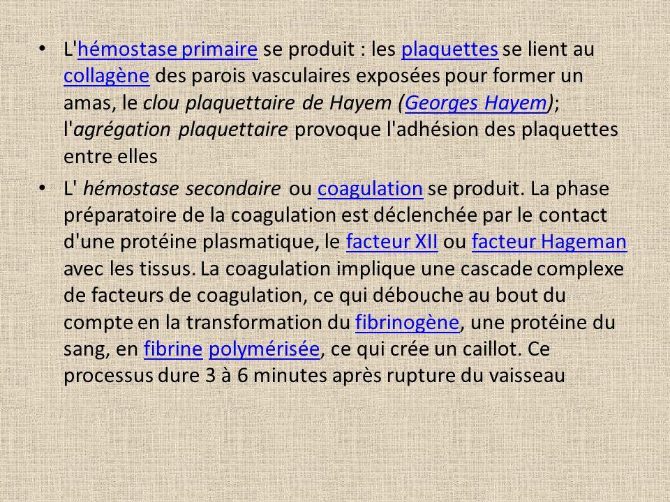 L'hémostase primaire se produit : les plaquettes se lient au collagène des parois vasculaires exposées pour former un amas, le clou plaquettaire de Ha