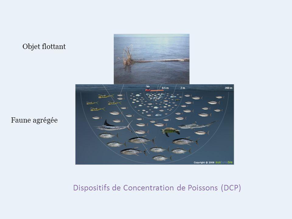 Dispositifs de Concentration de Poissons (DCP) Objet flottant Faune agrégée