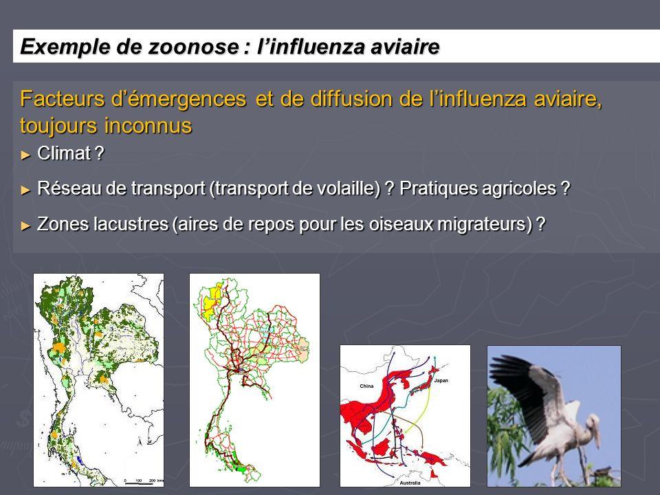Facteurs démergences et de diffusion de linfluenza aviaire, toujours inconnus Climat ? Climat ? Réseau de transport (transport de volaille) ? Pratique