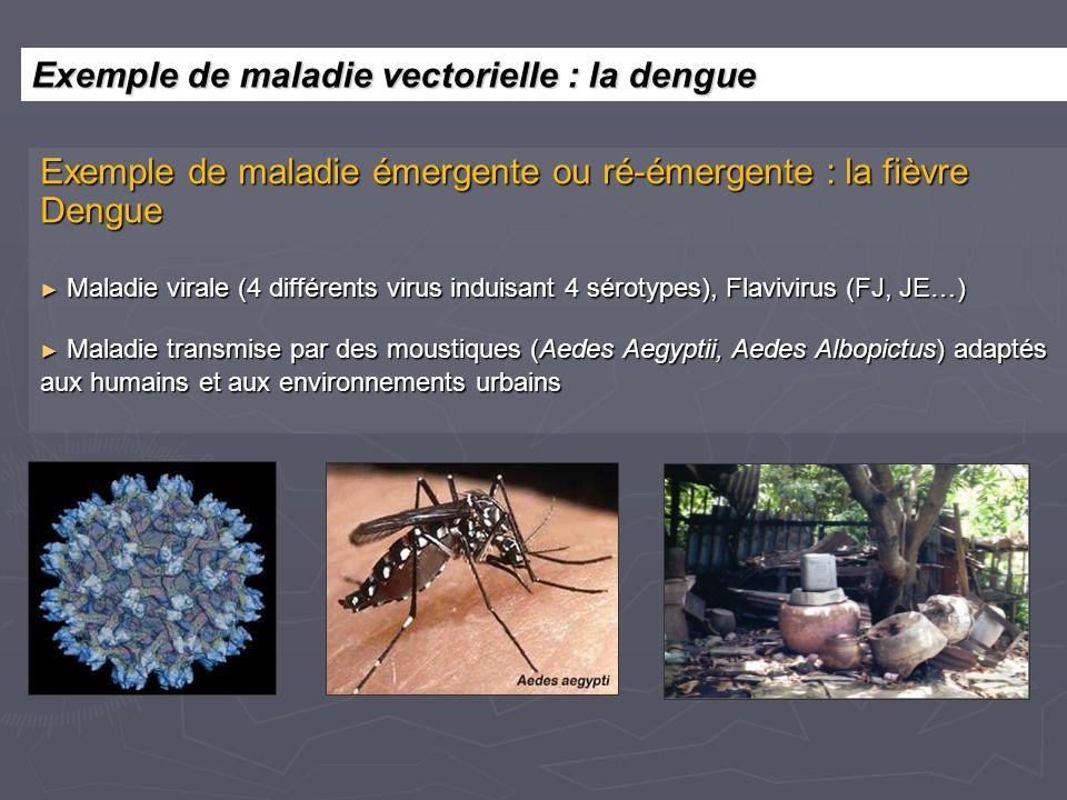 Exemple de maladie émergente ou ré-émergente : la fièvre Dengue Maladie virale (4 différents virus induisant 4 sérotypes), Flavivirus (FJ, JE…) Maladie virale (4 différents virus induisant 4 sérotypes), Flavivirus (FJ, JE…) Maladie transmise par des moustiques (Aedes Aegyptii, Aedes Albopictus) adaptés aux humains et aux environnements urbains Maladie transmise par des moustiques (Aedes Aegyptii, Aedes Albopictus) adaptés aux humains et aux environnements urbains Exemple de maladie vectorielle : la dengue