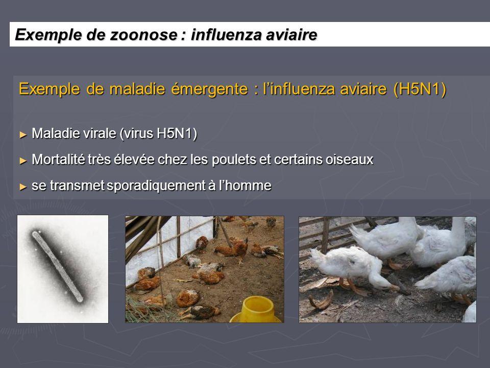 Exemple de maladie émergente : linfluenza aviaire (H5N1) Maladie virale (virus H5N1) Maladie virale (virus H5N1) Mortalité très élevée chez les poulet