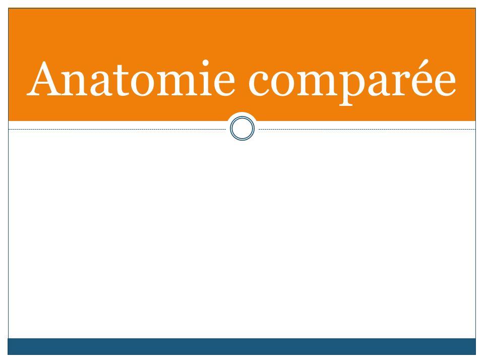 Anatomie comparée