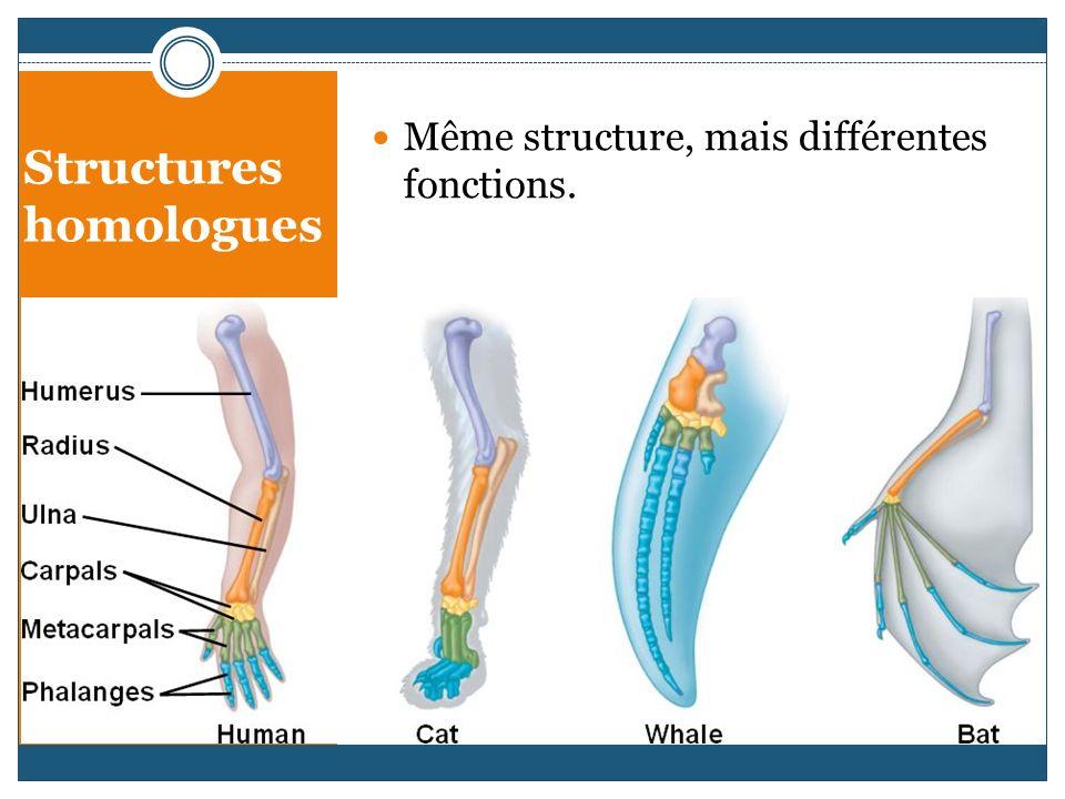 Structures homologues Même structure, mais différentes fonctions.