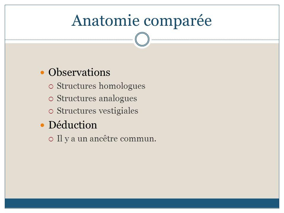 Anatomie comparée Observations Structures homologues Structures analogues Structures vestigiales Déduction Il y a un ancêtre commun.