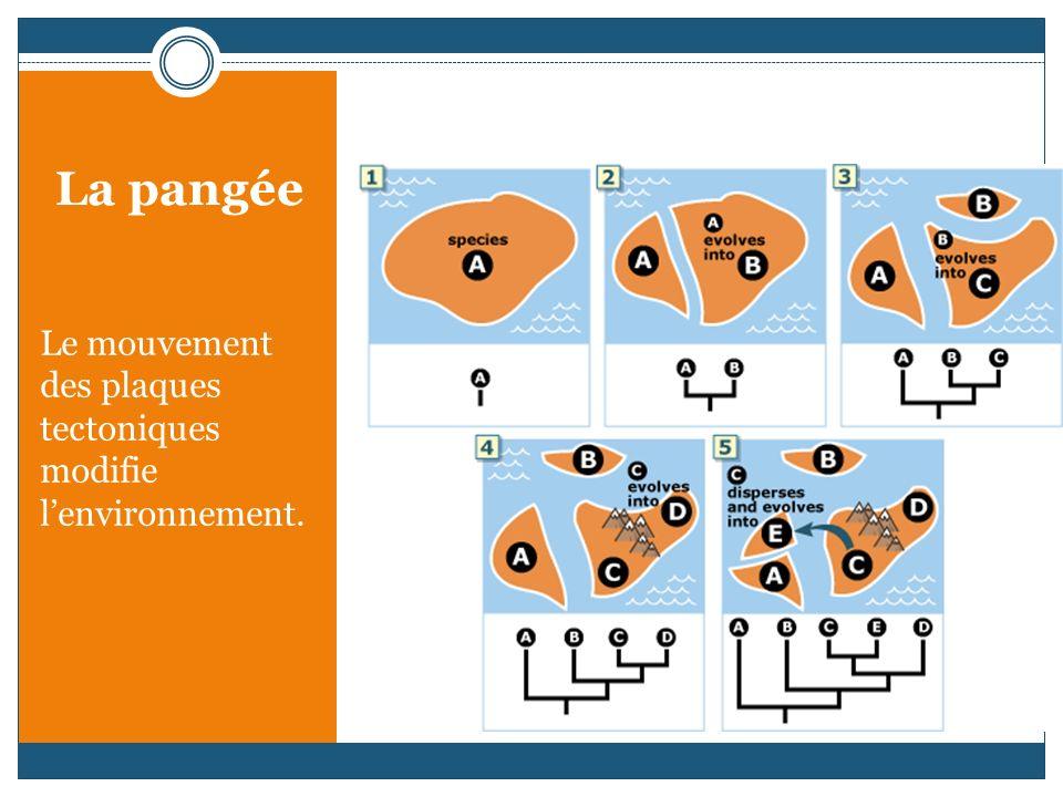 La pangée Le mouvement des plaques tectoniques modifie lenvironnement.
