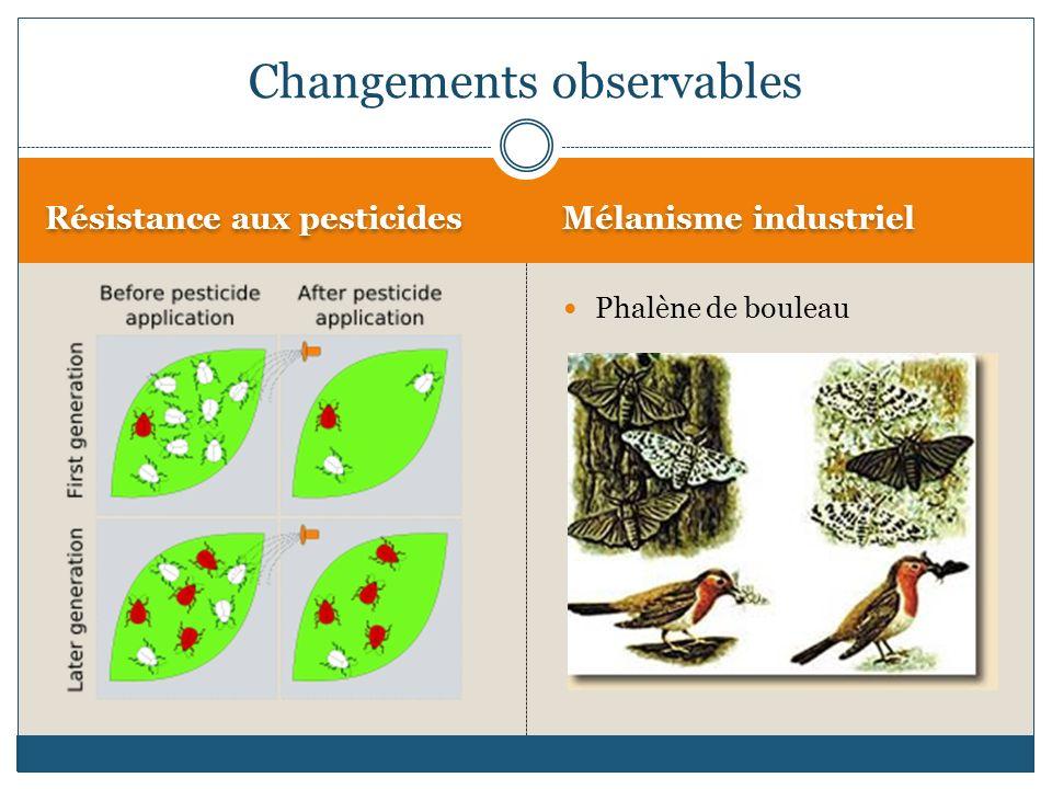 Résistance aux pesticides Mélanisme industriel Phalène de bouleau Changements observables