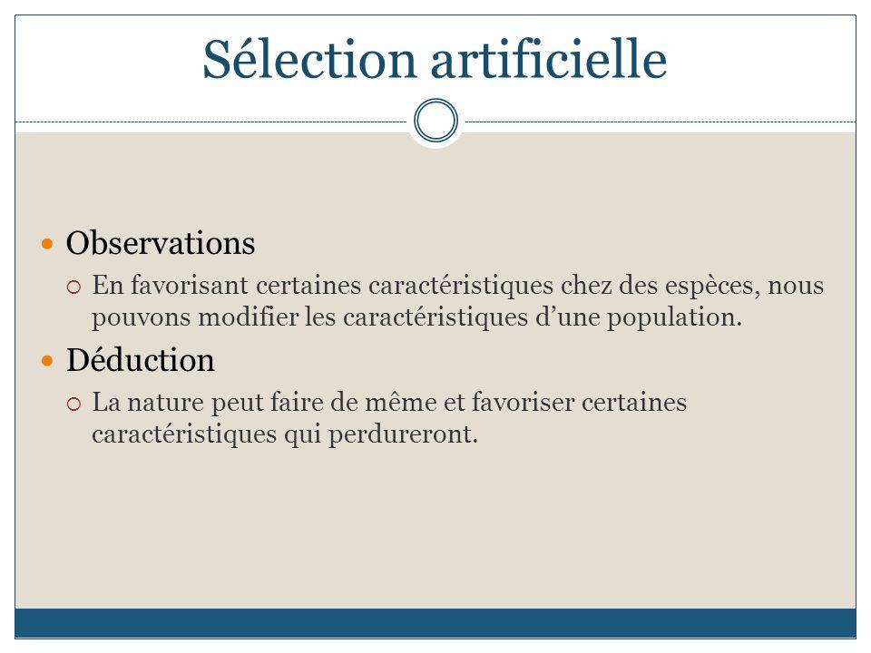 Sélection artificielle Observations En favorisant certaines caractéristiques chez des espèces, nous pouvons modifier les caractéristiques dune population.