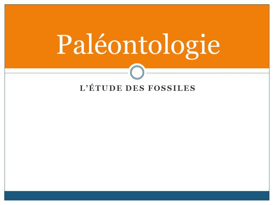 LÉTUDE DES FOSSILES Paléontologie