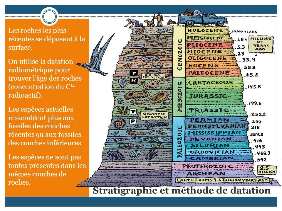 Stratigraphie et méthode de datation Les roches les plus récentes se déposent à la surface. On utilise la datation radiométrique pour trouver lâge des