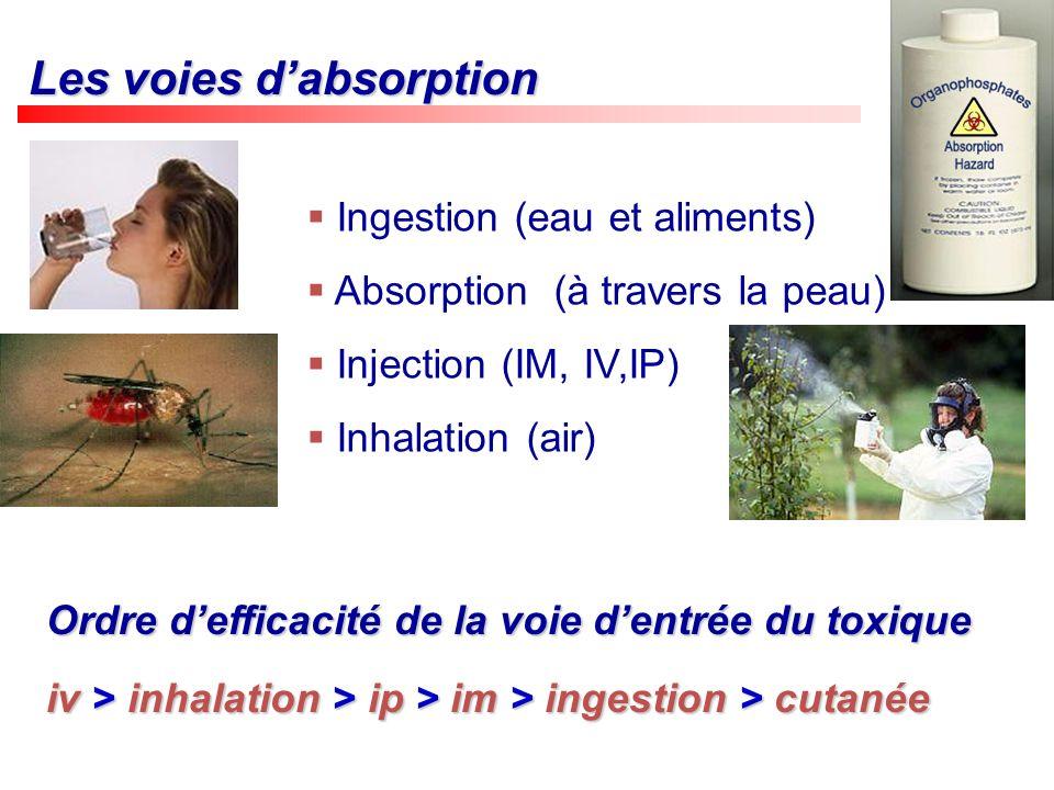 Les voies dabsorption Ingestion (eau et aliments) Absorption (à travers la peau) Injection (IM, IV,IP) Inhalation (air) Ordre defficacité de la voie d