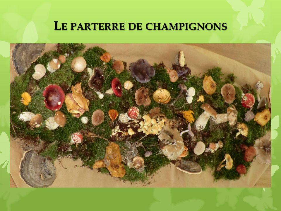 L E PARTERRE DE CHAMPIGNONS